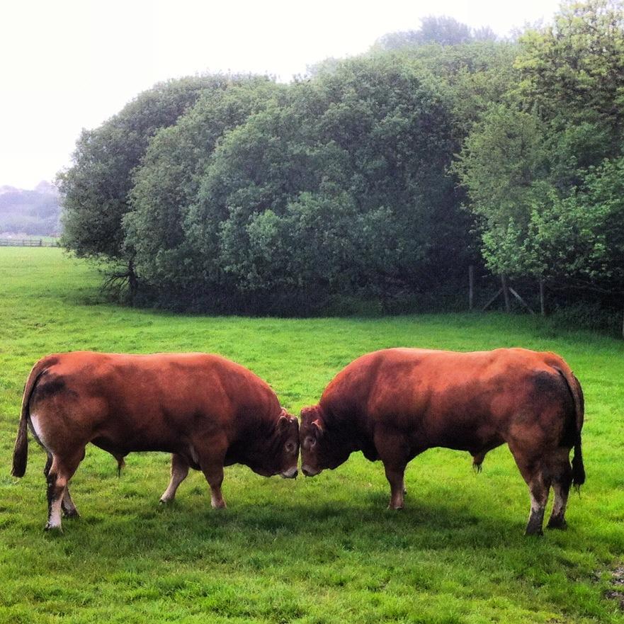 Kimmeridge Farmhouse - The Farm 05
