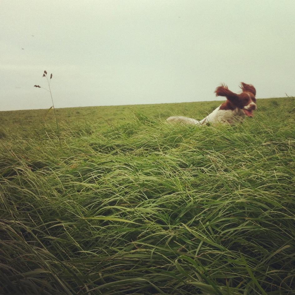 Kimmeridge Farmhouse - The Farm 07