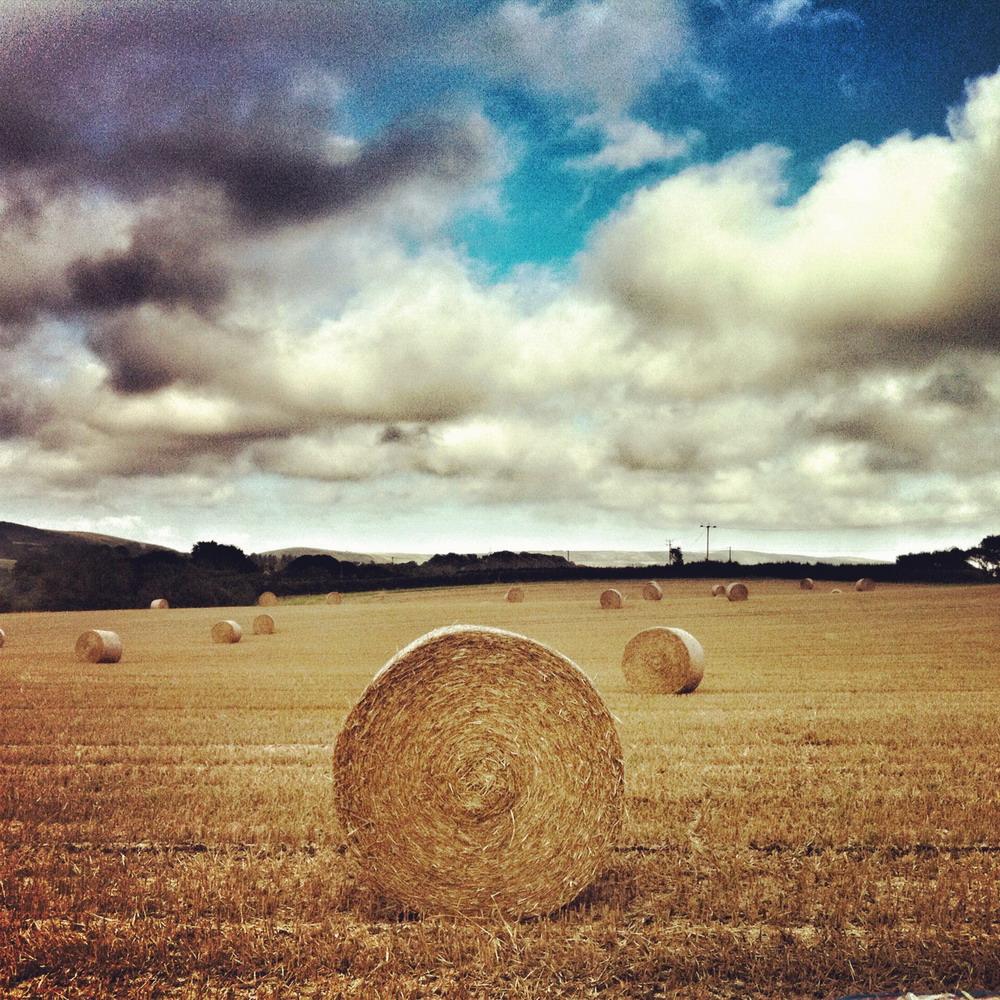 Kimmeridge Farmhouse - The Farm 18