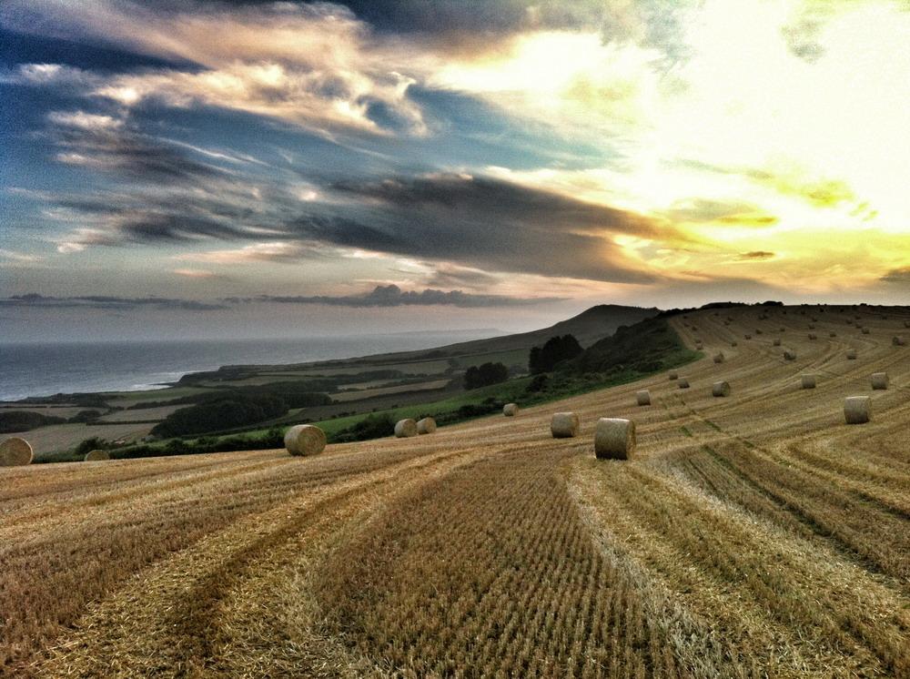 Kimmeridge Farmhouse - The Farm 19