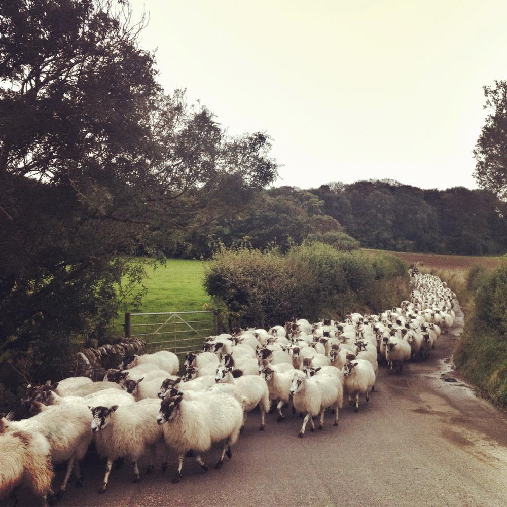 Kimmeridge Farmhouse - The Farm 26