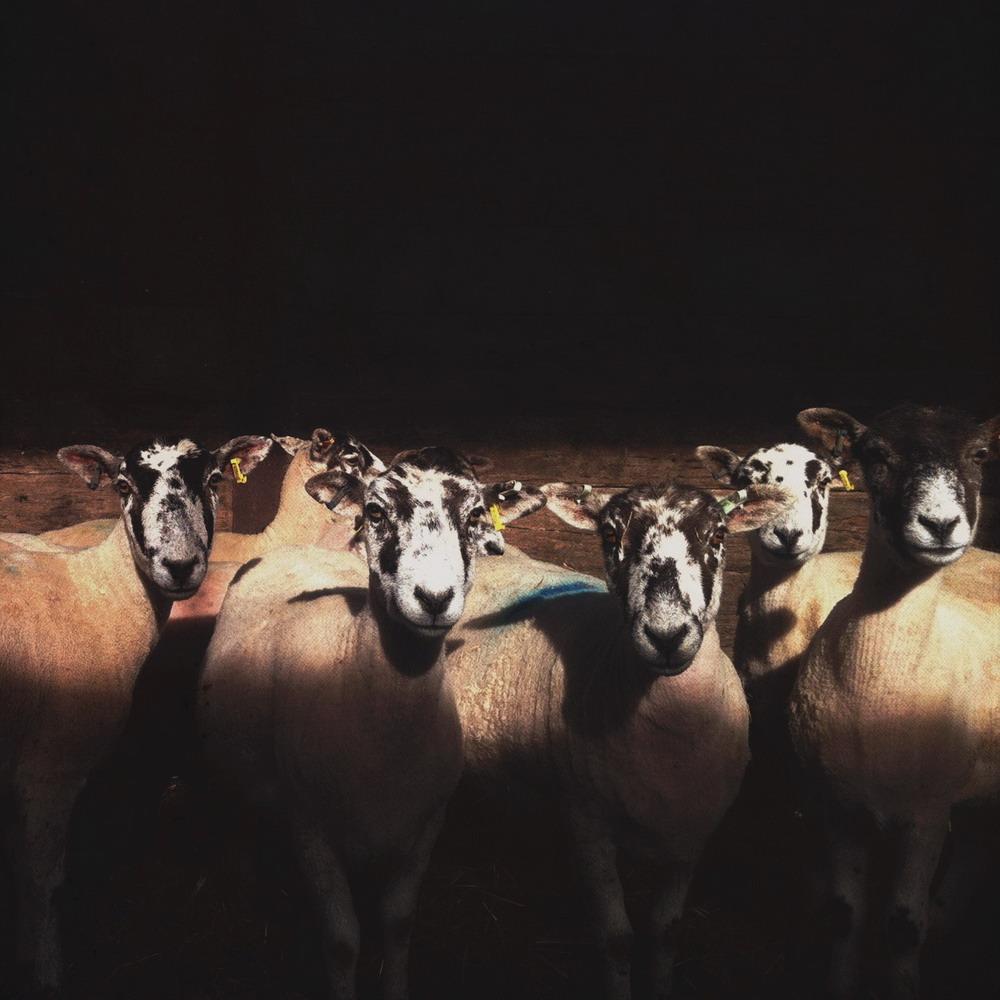 Kimmeridge Farmhouse - The Farm 28